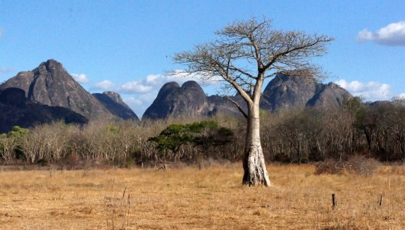 baobab and inselbergs, Niassa