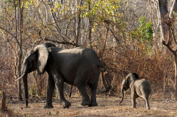 mom and baby, Niassa