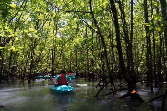 paddling through mangroves